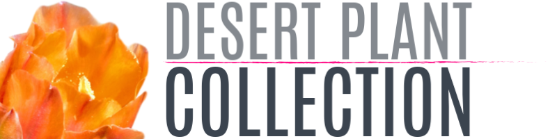 Desert Plant Collection Nursery
